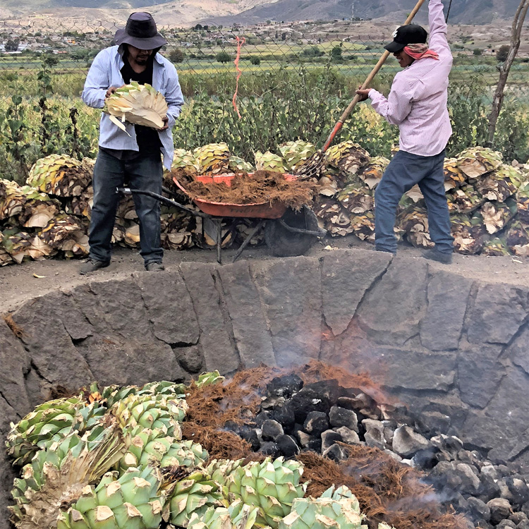 maguey loading pit